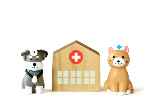 BiBi犬猫病院 休診