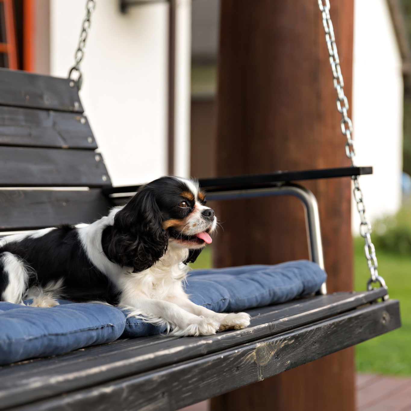 cute dog relaxing on the wooden bench in the garden